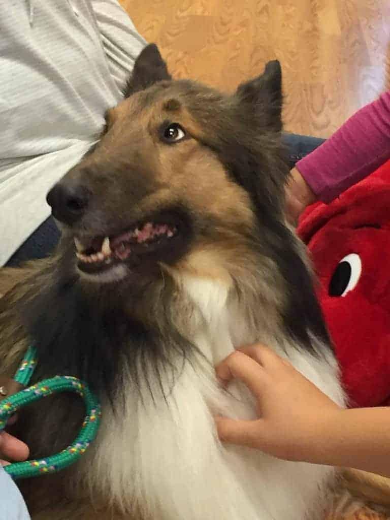 Therapy Dog Niko